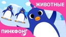 Танец Пингвинов | Песни про Животных | Пинкфонг Песни для Детей