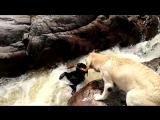 Собакен спасает своего четвероногого друга (6 sec)
