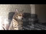 Ветеринарная аптечка для кошек