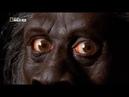 Обезьяночеловек с Суматры Реальность или фантастика