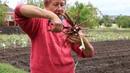 Деление и пересадка травянистого пиона