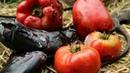 Баклажанная икра с дымком. Готовим на углях! | Eggplant caviar recipe | Kawior z bakłażana