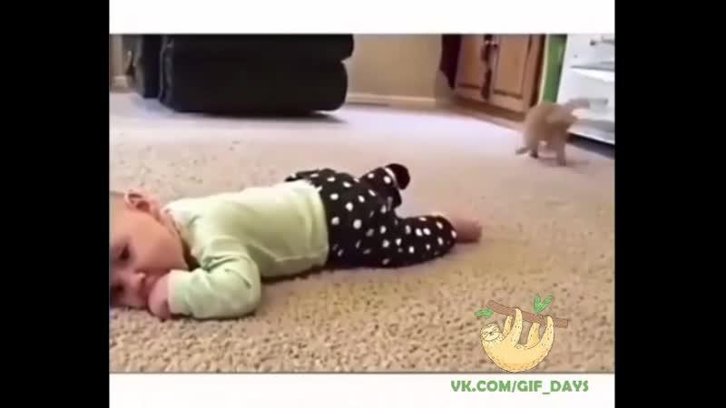 Просто котенку носок нужнее 😸😹😺
