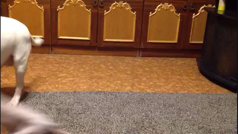 Герда Кира и дерзкий скинхед