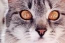 Если посмотреть в глаза кошки, можно понять, что они знают намного больше…