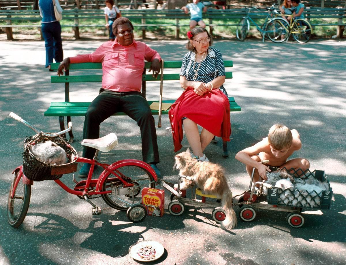 В парке на скамеечке: Нью-йоркские любители котов (1978 год)