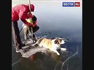 В Чите спасатели вытащили из озера Кенон вмерзшую в лед собаку.