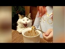 Best try not to laugh funny animal videos