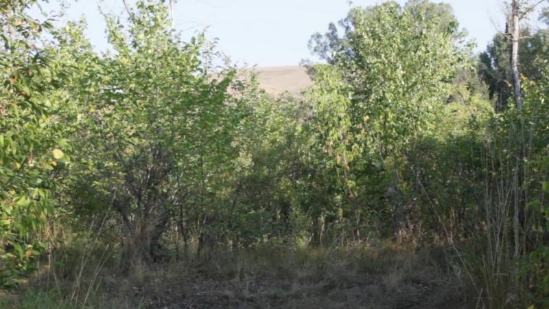 Белые трусы на фоне хребта Малый Накас