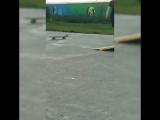 тру скейтер