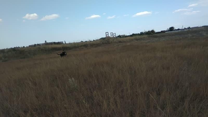 8 09 2018 Арчи и Изюма на прогулке