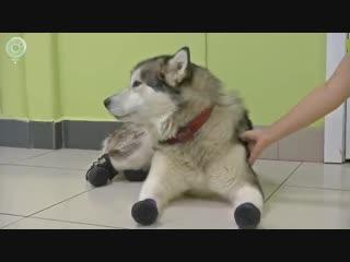 История чудесного спасения уникальной собаки