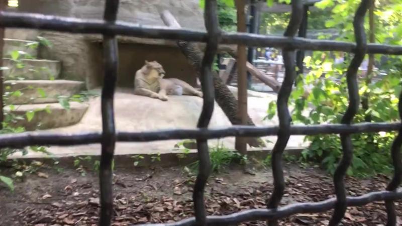 27.06.18 Зоопарк 2