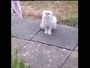What the fock is that Is that fucking cat