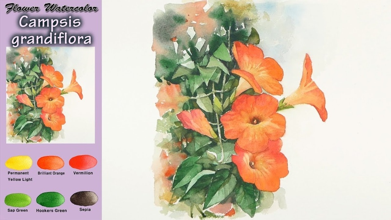 Campsis Grandiflora - Drawing Basic Flower Watercolor. (wet-in-wet. Arches rough) NAMIL ART