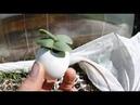 Как сделать грядку по дерну для высокого урожая огурцов