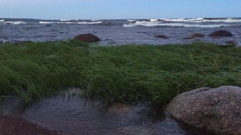Мыс Кюренниеми. Финский залив