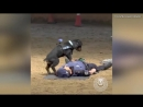 Police Dog Jumps Up and Down on Agents Chest in Mock CPR Demonstration