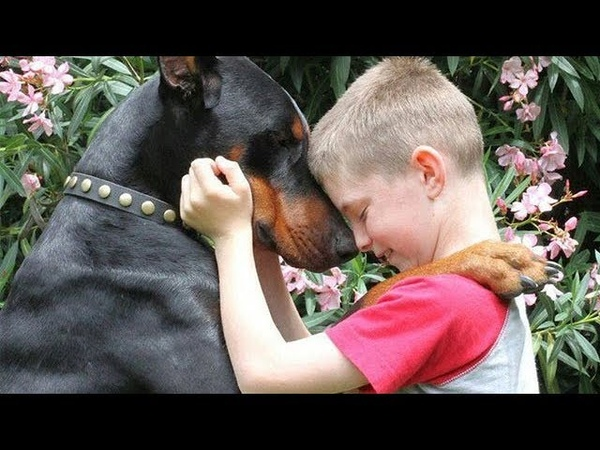 Doberman Dog Protecting Babies and Kids Compilation 2018 | NEW HD