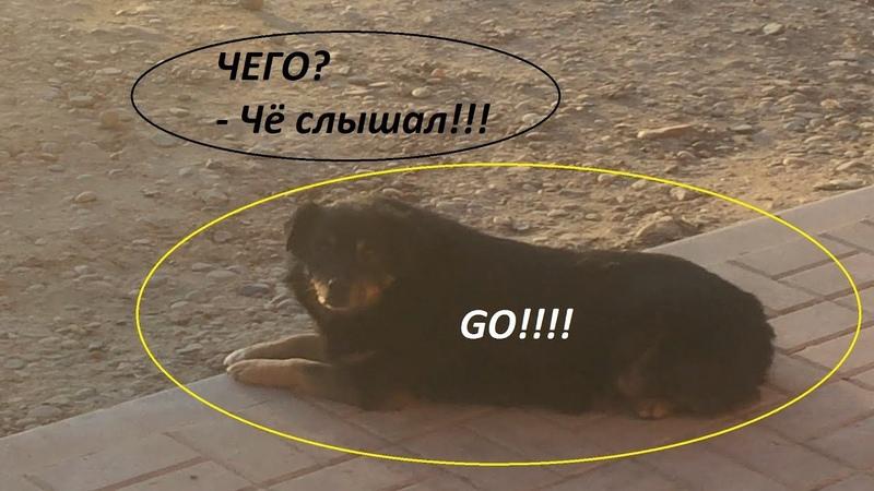 Живая собака заговорила с человеком | Шок Контент | Палкан рвёт Ютуб | ЖЕСТЬ!