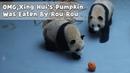 OMG,Xing Hui's Pumpkin Was Eaten By Rou Rou | iPanda