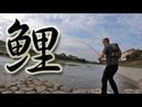 Carp Fishing Kyoto Tips for catching carp in rivers
