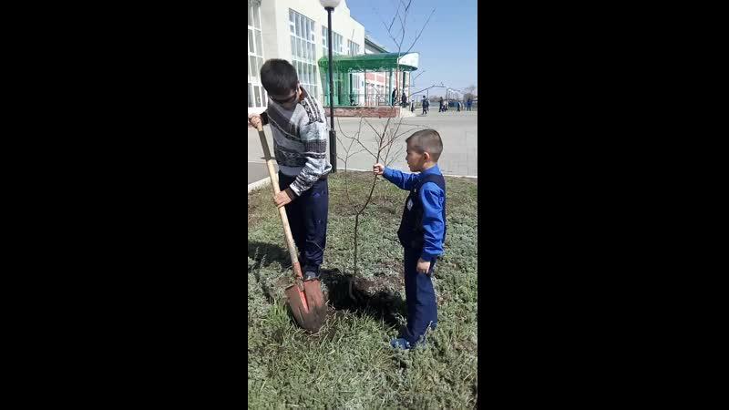 Посадили дерево Ардак и папа