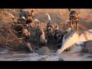Нильские крокодилы и гиеновидные собаки делят тушу мёртвого жирафа