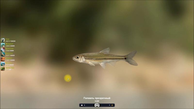 Голавль прозрачный, открытие локации Кровавый ручей в игре Трофейная рыбалка 2