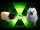 Imagine Doggos Radioactive