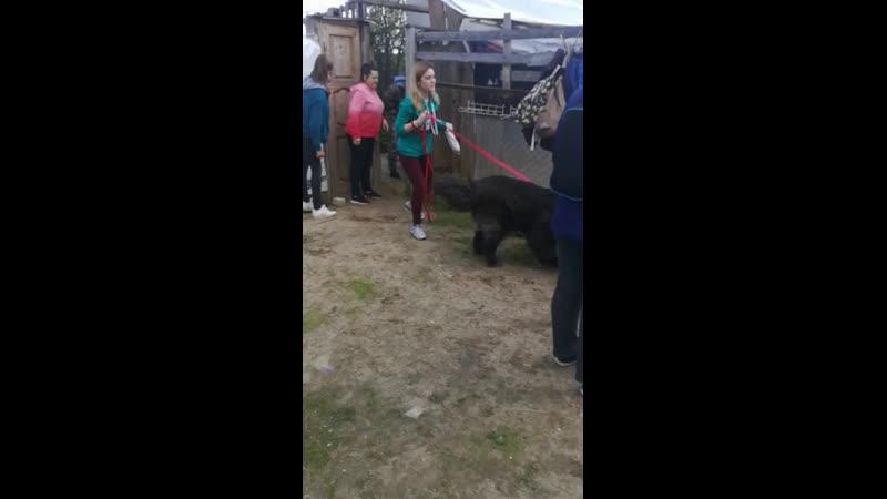 Еженедельная воскресная встреча с подопечными собаками движения Дай лапу на арендованном участке в ДКЗдоровье.