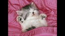 Котики и милые котята