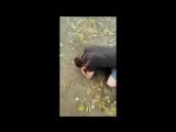 Мужчина снял на видео, как спас старушку от избиения
