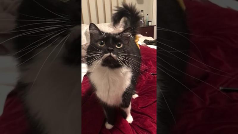 Cat saying HI! to her human