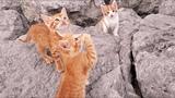 3 funniest cats ever - little kitten - Die LAUGING NOW