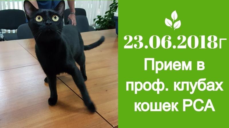 Прием в проф. клубах кошек PCA 23.06.2018г