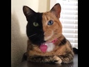 Venus, the two faced cat!