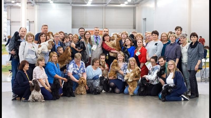 2019 Интернациональная выставка собак CACIB FCI Мемориал А П Мазовера