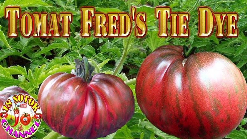Томат - Fred's Tie Dye (Тай дай Фреда)