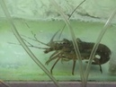 151 Вьетнам Нячанг путешествие Ресторан морепродуктов Vietnam Nha Trang crocodile Seafood Restaurant