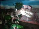 Выставка динозавров Омск