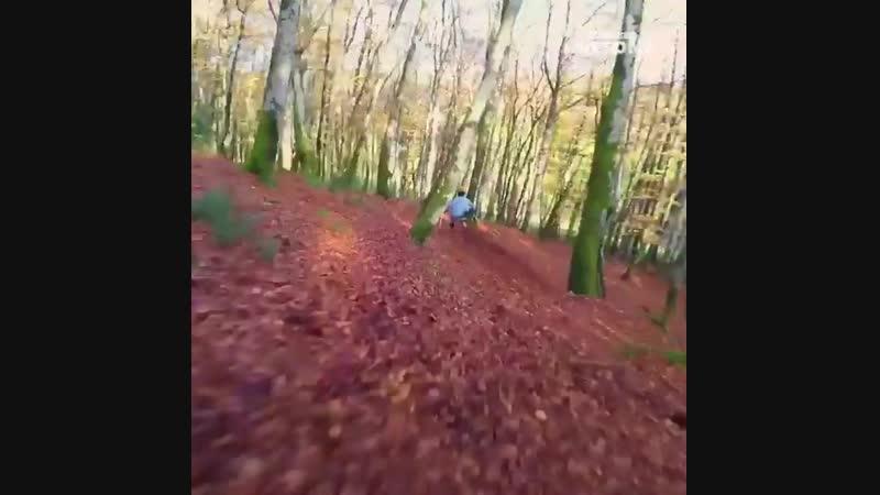 Осень лайв