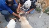 Спасение и помощь собакам. Я и Эмин