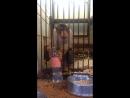 Саванна Зоопарк Уфа Live