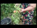 Во саду ли в огороде Потеряете Урожай Если Не Будете Действовать Решительные Меры
