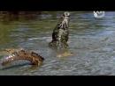 BBC Самые опасные хищники 02 Южная Африка 2 Познавательный природа животные 2009