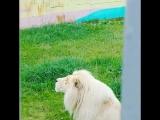 Ярославский зоопарк 19.07.2018