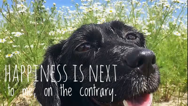 Happiness is next to me, on the contrary. | счастье рядом со мной, напротив.