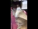Расстрелянная собака - 1