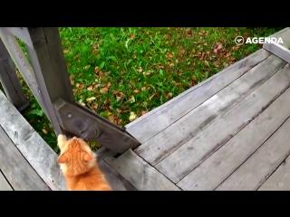 История кота Кеши из Кижей